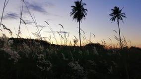 Цветки травы пошатывают вдоль ветра в вечере видеоматериал