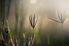 Цветки травы под солнечным светом Стоковые Изображения