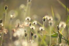 Цветки травы под солнечным светом Стоковое Изображение RF