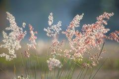 Цветки травы под солнечным светом Стоковое фото RF