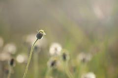 Цветки травы под солнечным светом Стоковые Фотографии RF