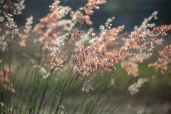 Цветки травы под солнечным светом Стоковая Фотография RF