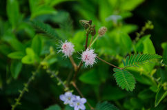 Цветки травы спать Стоковые Фото
