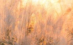 Цветки травы Стоковые Фотографии RF