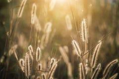 Цветки травы Стоковое Изображение RF