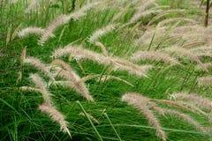 Цветки травы Стоковая Фотография RF