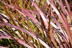 Цветки травы Стоковые Изображения