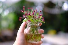Цветки травы стоковые изображения rf
