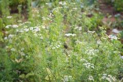 Цветки травы Стоковое Изображение