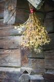 Цветки трав Стоковые Фото