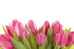 Цветки тюльпана стоковая фотография