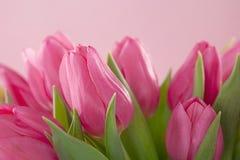 Цветки тюльпана Стоковые Изображения RF