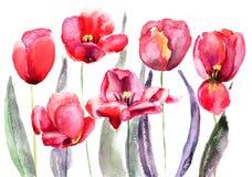 Цветки тюльпанов Стоковые Фотографии RF