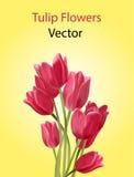 Цветки тюльпана вектора Стоковые Изображения RF