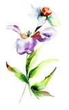 Цветки тюльпана и Narcissus Стоковые Изображения