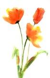 Цветки тюльпана, картина акварели Стоковая Фотография