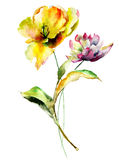 Цветки тюльпанов и пиона Стоковое Изображение