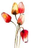 Цветки тюльпанов Стоковая Фотография RF