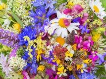 Цветки луга горы стоковое фото rf