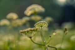 Цветки луга на запачканной предпосылке Стоковые Фото