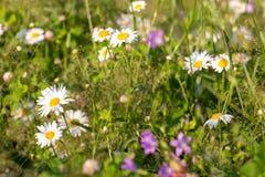 Цветки луга на солнечный день стоковое изображение rf