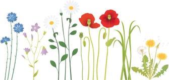 Цветки луга иллюстрация штока
