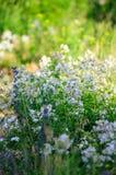 Цветки луга Стоковые Изображения RF