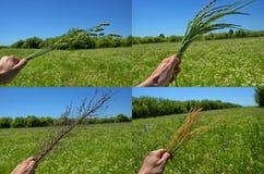 Цветки луга Стоковые Фото