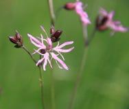 Цветки луга Стоковое Изображение RF