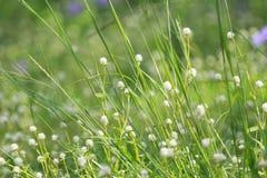 Цветки луга Стоковое Изображение
