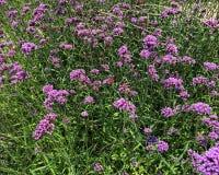 Цветки луга Стоковая Фотография