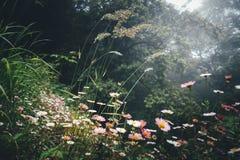 Цветки луга Стоковое Фото