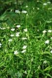 Цветки луга Стоковые Изображения