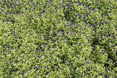 Цветки дужки Стоковые Фотографии RF