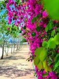 Цветки украшают дырочками в пути стоковое фото