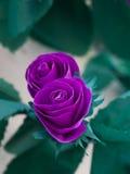 цветки украшений завертывают tomar в бумагу Стоковое фото RF