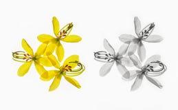 Цветки умножат на белой предпосылке летом стоковые изображения rf