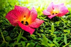Цветки упали на зеленую траву Стоковая Фотография RF