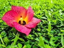 Цветки упали на зеленую траву Стоковая Фотография