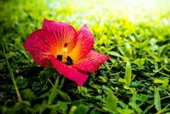 Цветки упали на зеленую траву Стоковые Изображения RF