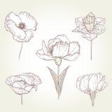 цветки установили сбор винограда Стоковое Изображение
