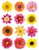 цветки установили Стоковое Изображение