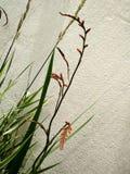 Цветки установленные стеной Стоковые Изображения RF