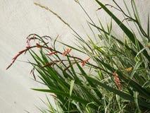 Цветки установленные стеной Стоковое Изображение RF