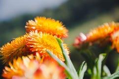 Цветки утра на горе стоковое фото rf