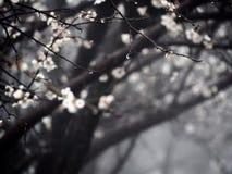 Цветки утра Стоковое Изображение RF