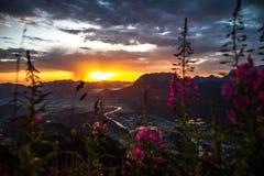 Цветки утра Стоковое Фото