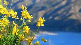 Цветки дуя в ветре видеоматериал