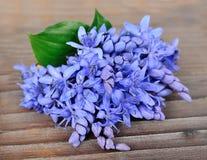 Цветки фиолетов стоковые изображения