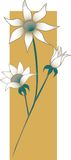 цветки фланели стоковое фото